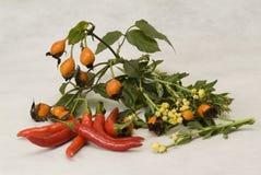 τα πιπέρια ζωής αυξήθηκαν α& Στοκ Φωτογραφίες
