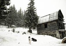 Τα πιό κρύα βουνά θερμαίνουν την καρδιά μου Στοκ εικόνες με δικαίωμα ελεύθερης χρήσης