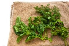 Τα πλυμένα φρέσκα πράσινα στην πετσέτα κουζινών, υγιής τρόπος ζωής, φιλικό, ακατέργαστο, vegan υπόβαθρο eco, διάστημα αντιγράφων, στοκ φωτογραφία