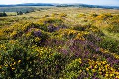 Τα πολλά χρώματα Dartmoor, Devon, Αγγλία Στοκ Φωτογραφία