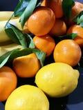 Τα πορτοκάλια και τα λεμόνια παρουσιάζουν ότι τα εσπεριδοειδή λάμπουν στοκ εικόνα