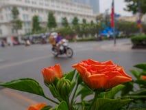 Τα πορτοκαλιά λουλούδια στο υπόβαθρο είναι δρόμοι στοκ εικόνα