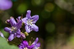 Τα πορφυρά λουλούδια κλείνουν επάνω της άνθισης εγκαταστάσεων στοκ εικόνες