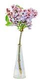 Τα πορφυρά, ρόδινα vulgaris (ιώδης ή κοινή πασχαλιά) λουλούδια Syringa σε ένα διαφανές βάζο, κλείνουν επάνω, απομονωμένο, άσπρο υ Στοκ Εικόνες
