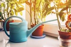 Τα ποτίζοντας φυτικές σπορόφυτα και οι εγκαταστάσεις σπιτιών με ένα πότισμα μπορούν, αυξανόμενος στο windowsill στο σπίτι στρέψτε Στοκ φωτογραφία με δικαίωμα ελεύθερης χρήσης