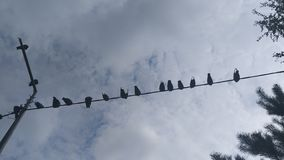 τα πουλιά απομόνωσαν το άσπρο καλώδιο στοκ εικόνες
