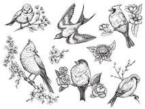 Τα πουλιά δίνουν τα συρμένα illuatrations στο εκλεκτής ποιότητας ύφος με τα λουλούδια ανθών άνοιξη Στοκ Εικόνες
