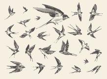 Τα πουλιά κοπαδιών που πετούν καταπίνουν το συρμένο διανυσματικό σκίτσο Στοκ εικόνες με δικαίωμα ελεύθερης χρήσης