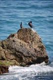 Τα πουλιά Μαύρης Θάλασσας καθαρίζουν τα φτερά σε μια πέτρα στη μέση του νερού Στοκ εικόνες με δικαίωμα ελεύθερης χρήσης
