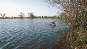 Τα πουλιά στη λίμνη κολυμπούν μεταξύ των δέντρων κατά τη διάρκεια του ηλιοβασιλέματος φιλμ μικρού μήκους