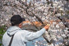 Τα πουλιά στον άνθρωπο παραδίδουν το πάρκο στοκ φωτογραφία με δικαίωμα ελεύθερης χρήσης