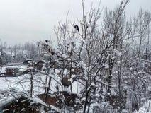 Τα πουλιά αγάπης απολαμβάνουν συνδεδεμένο στο χιόνι δέντρο Στοκ φωτογραφίες με δικαίωμα ελεύθερης χρήσης