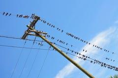 τα πουλιά απομόνωσαν το άσπρο καλώδιο Στοκ φωτογραφίες με δικαίωμα ελεύθερης χρήσης