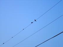 τα πουλιά απομόνωσαν το άσπρο καλώδιο Στοκ εικόνα με δικαίωμα ελεύθερης χρήσης