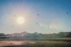 Τα πουλιά είναι ελεύθερα Στοκ εικόνα με δικαίωμα ελεύθερης χρήσης