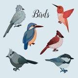 Τα πουλιά καθορισμένα το διαθέσιμο συρμένο ύφος Στοκ φωτογραφίες με δικαίωμα ελεύθερης χρήσης