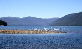 Τα πουλιά παίρνουν Στοκ εικόνες με δικαίωμα ελεύθερης χρήσης