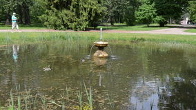 Τα πουλιά παπιών κολυμπούν στη λίμνη με τον παφλασμό πηγών στο θερινό πάρκο φιλμ μικρού μήκους
