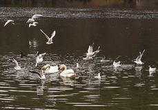 Τα πουλιά πιάνουν το ψωμί Στοκ Εικόνα