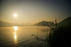 τα πουλιά στρέφουν το ομιχλώδες μαλακό δέντρο πρωινού λιμνών Στοκ φωτογραφίες με δικαίωμα ελεύθερης χρήσης