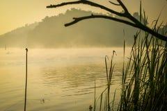 τα πουλιά στρέφουν το ομιχλώδες μαλακό δέντρο πρωινού λιμνών Στοκ εικόνα με δικαίωμα ελεύθερης χρήσης