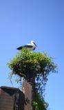 Τα πουλιά τοποθετούνται τον τεχνητό πελαργό Στοκ Φωτογραφία