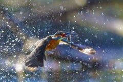 Τα πουλιά Στοκ Εικόνες
