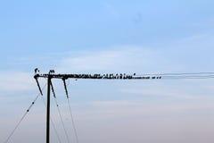 Τα πουλιά, Alfred Hitchcock Στοκ Εικόνα