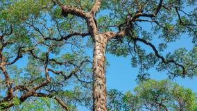 Τα πράσινα δέντρα αυξάνονται στο δάσος στοκ φωτογραφίες