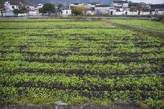 Τα πράσινα στον τομέα στοκ φωτογραφία με δικαίωμα ελεύθερης χρήσης