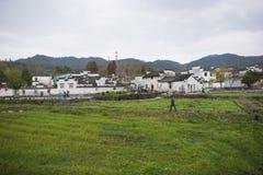 Τα πράσινα στον τομέα στοκ εικόνα με δικαίωμα ελεύθερης χρήσης