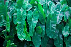 Τα πράσινα φύλλα ευθυγράμμισαν την πλήρη περιοχή Στοκ Εικόνες