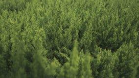 Τα πράσινα φύλλα, θολώνοντας υπόβαθρο στοκ εικόνες