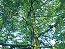 Τα πράσινα χρώματα των βουνών Στοκ φωτογραφίες με δικαίωμα ελεύθερης χρήσης