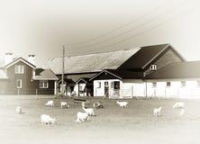 Τα πρόβατα της Νορβηγίας καλλιεργούν το εκλεκτής ποιότητας υπόβαθρο Στοκ Φωτογραφία