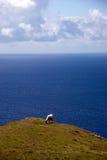 τα πρόβατα leage Στοκ Φωτογραφίες