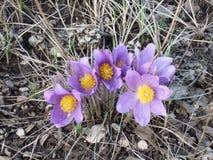 Τα πρώτα λουλούδια άνοιξη στοκ εικόνες με δικαίωμα ελεύθερης χρήσης