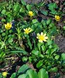 Τα πρώτα λουλούδια στο πάρκο Στοκ Φωτογραφία