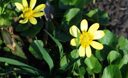 Τα πρώτα λουλούδια στο πάρκο Στοκ Φωτογραφίες