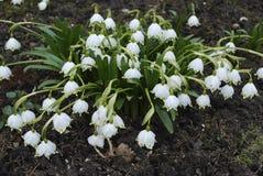 Τα πρώτα λουλούδια της επίθεσης άνοιξη Στοκ εικόνες με δικαίωμα ελεύθερης χρήσης