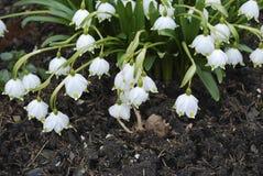 Τα πρώτα λουλούδια της επίθεσης άνοιξη Στοκ Φωτογραφία