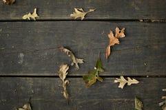 Τα πρώτα προφανή στοιχεία του autumn& x27 άφιξη του s Στοκ φωτογραφίες με δικαίωμα ελεύθερης χρήσης