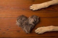 Τα πόδια σκυλιών ` s lon το ξύλινο υπόβαθρο πατωμάτων με μια καρδιά του δ Στοκ φωτογραφίες με δικαίωμα ελεύθερης χρήσης