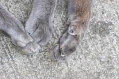 Τα πόδια γατών ` s, κλείνουν επάνω με το πόδι γατών, πόδια γατών στην οδό Στοκ Εικόνα