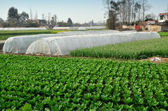 Pengzhou, Κίνα: Πλαστικά θερμοκήπια στο αγρόκτημα Στοκ εικόνες με δικαίωμα ελεύθερης χρήσης
