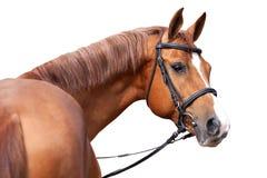 Τα ρωσικά φορούν το άλογο Στοκ φωτογραφίες με δικαίωμα ελεύθερης χρήσης