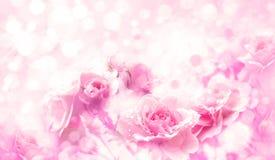 Τα ρόδινα τριαντάφυλλα ανθίζουν bokeh το υπόβαθρο Στοκ Φωτογραφίες