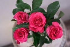Τα ρόδινα τριαντάφυλλα σε μια κορυφή βλέπουν το άσπρο υπόβαθρο Στοκ Εικόνες