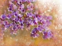 Τα ρόδινα λουλούδια αναπηδούν το ρομαντικό υπόβαθρο Στοκ εικόνες με δικαίωμα ελεύθερης χρήσης
