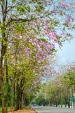 Τα ρόδινα λουλούδια διαδρομών Στοκ εικόνα με δικαίωμα ελεύθερης χρήσης